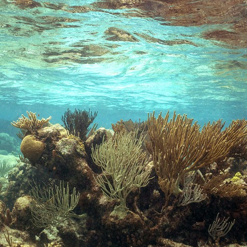 Reef in Grand Cayman