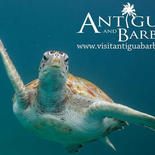 Antigua tourism poster of underwater shot of a turtle