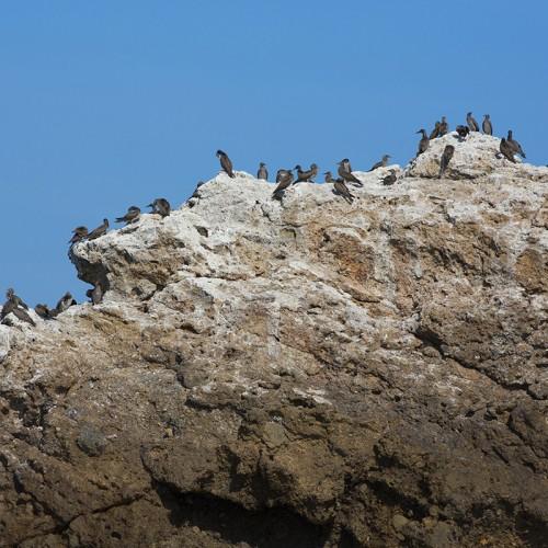 bird in islas marietas