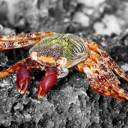 colourful crab on a rock