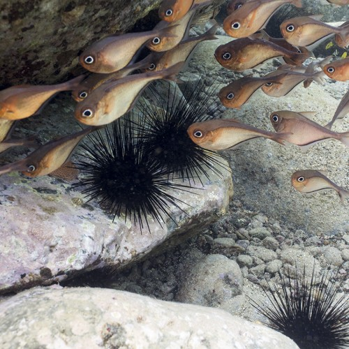fish on reef saint lucia